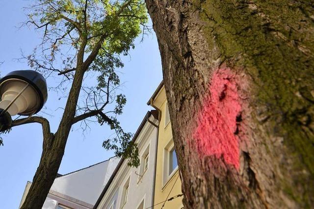 Nach Kahlhieb-Protest: Amt will Bäume im Friedwald beisetzen