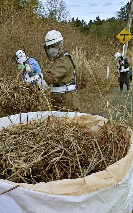 Arbeiter in Schutzkleidung entfernen r... Kernkraftwerk verstrahltes Gestrüpp.   | Foto: dpa