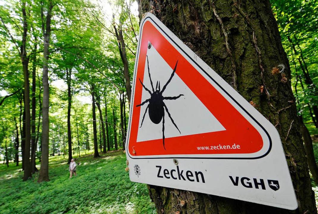 Zecken-Virus breitet sich vermehrt nach Norddeutschland aus