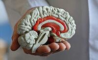 Woche des Gehirns an der Universität Basel
