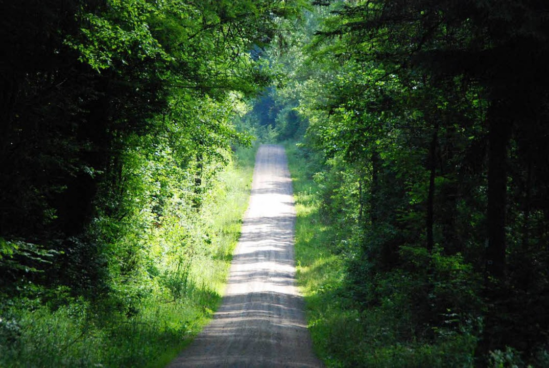 Der Lörracher Wald dient ökologischen und ökonomischen Zwecken.  | Foto: Maja Tolsdorf
