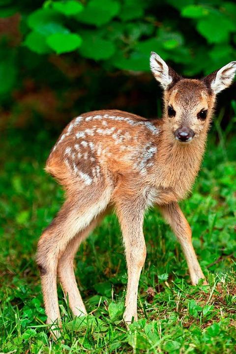 Jetzt erblicken viele Tierbabys das Licht der Welt.    | Foto: dpa
