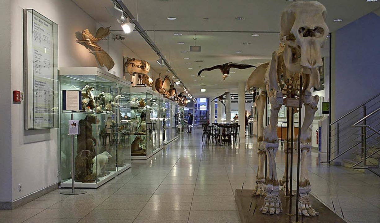 Ein Blick in die Tiersammlung des zoologischen Instituts     Foto: Privat