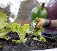 Tipps zum Gärtnern – und passendes Grün gleich dazu