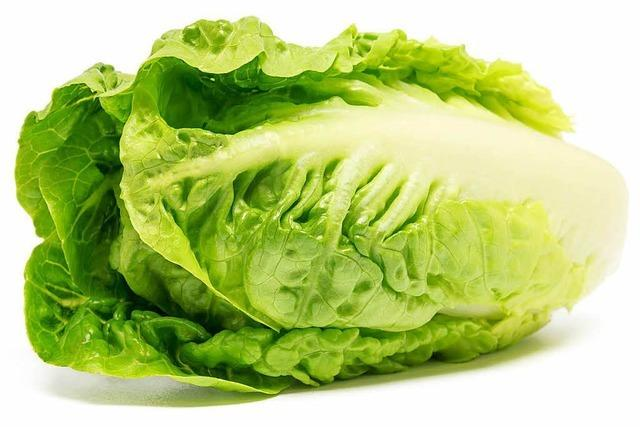 Römersalat ist knackig und herb-frisch