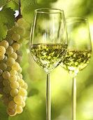 Frische Frühlings- und Sommerweine