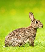 Kaninchen oder Hase? Die Uni Freiburg bittet um Mithilfe