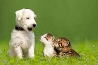 So findet man das richtige Haustier