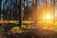 Die Gesetze des Waldes: Was im Wald erlaubt ist und was nicht