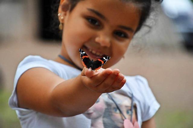 Schnappschuss von Mädchen mit Schmetterling ist Foto des Jahres im Kreis Emmendingen