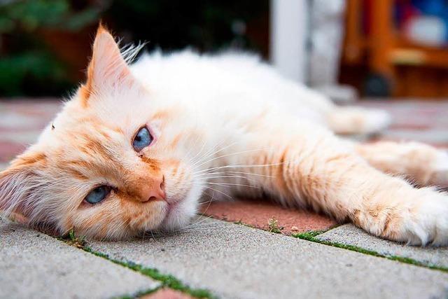 Wer zahlt die Tierarztkosten bei aufgefunden Katzen in Not?