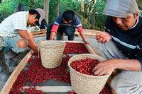 Teikei Coffee verkauft solidarischen Kaffee aus Mexiko