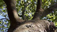 Wissenschaflter sprechen über ihre Forschung zum Thema Bäume