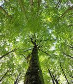 Klimastress im Wald