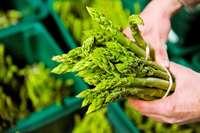 Warum macht grüner Spargel nur zehn Prozent des Anbaus aus?