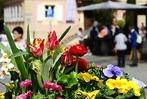 """Fotos: """"Blühendes Staufen"""" – Verkaufsoffener Sonntag mit Modemeile"""