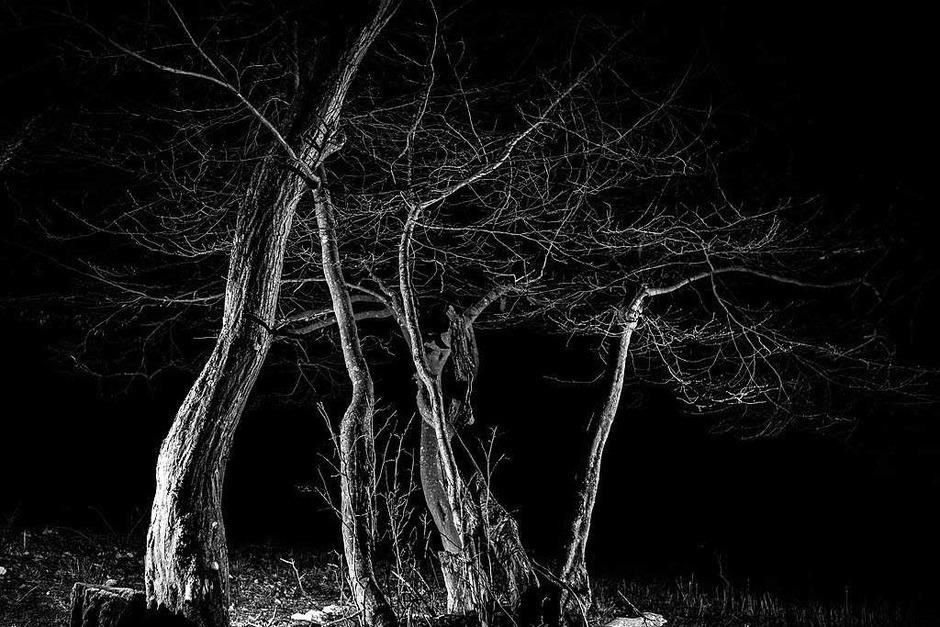 Nachts im Wald (Foto: Carlotta Huber)
