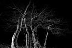 Fotos: Bäume vom Blitz getroffen