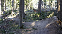 Mountainbike-Strecke nimmt schon sichtbare Formen an