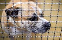 Hundeangriff hat juristisches Nachspiel