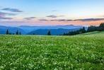 Fotos: Natur steht Modell – Frühlingsfotos vom Feldberg