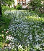 Mehr Blumen für Insekten in Denzlingen