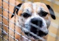 Drei Tote in kurzer Zeit: Wie können Hundeangriffe verhindert werden?