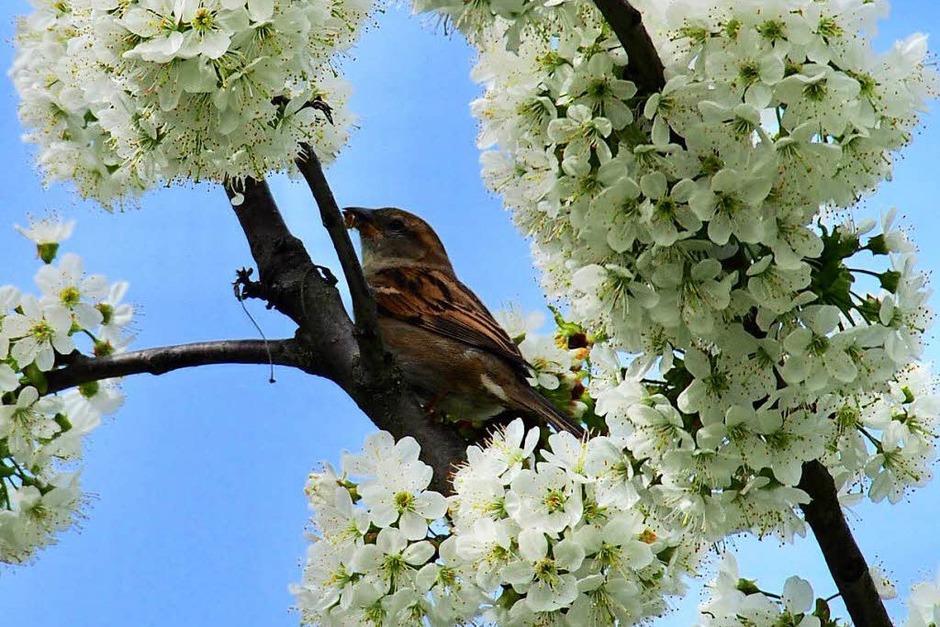 Nur der frühe Vogel fängt den Wurm... (Foto: Markus Donner)