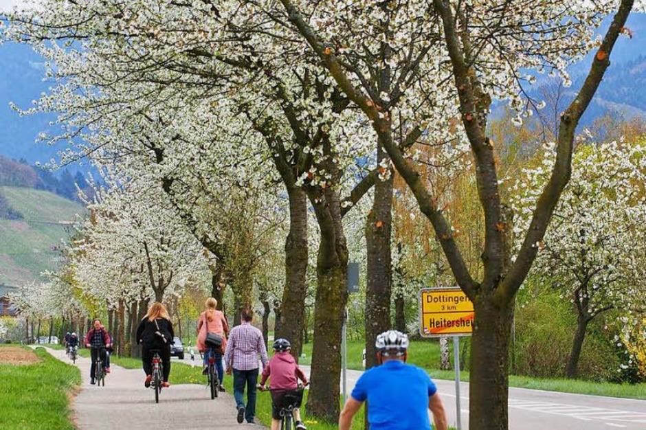 Der Radweg von Heitersheim nach Ballrechten-Dottingen. (Foto: Markus Donner)
