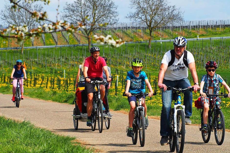 Er durch die Reben, dann mitten durch den Schlosspark – Heitersheim ist auch ein Eldorado für Radfahrer. (Foto: Markus Donner)