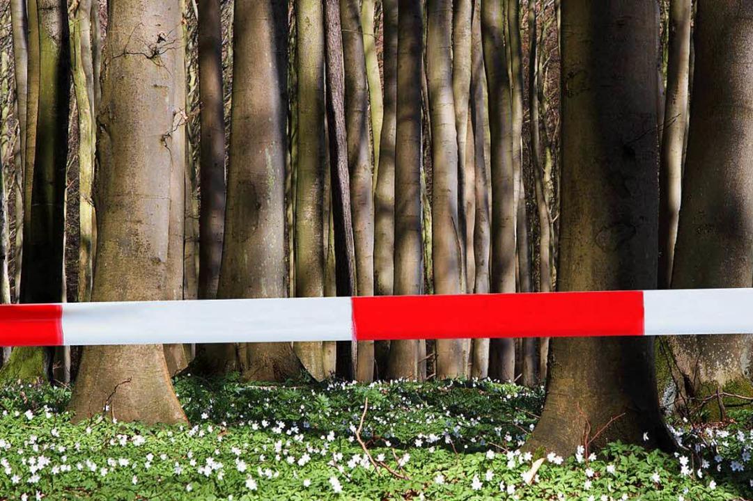 Auf einer Fläche von 100 Quadratmetern... Waldstück in Landwasser (Symbolbild).  | Foto: Photographer: Klaus Hartwig