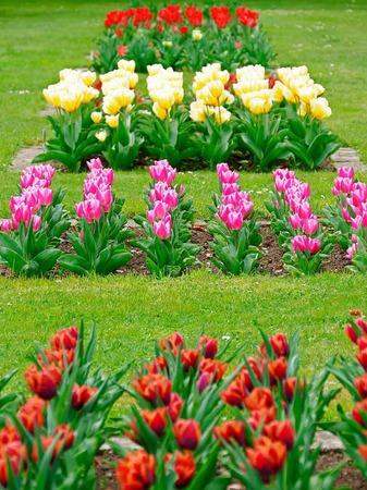 Der Frühling hält endlich Einzug und allerorten sprießt und gedeiht es. Bad Krozingen und sein Kurpark stehen da nicht nach und laden mit blühender Pracht an vielen Stellen der Kurstadt ein.