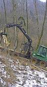 Forstleute raten zur Zurückhaltung beim Einschlag