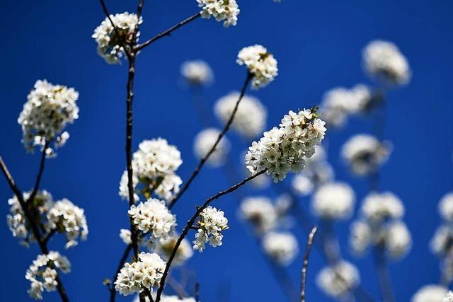 Am Wochenende noch Sonne genießen – dann gibt es Aprilwetter