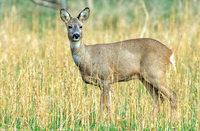 Chaos bei Vergabe der Jagdpachtverträge kann für Lahr teuer werden