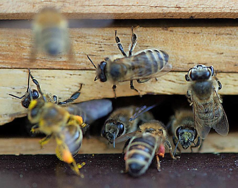 Bienen an einem Bienenstock | Foto: dpa