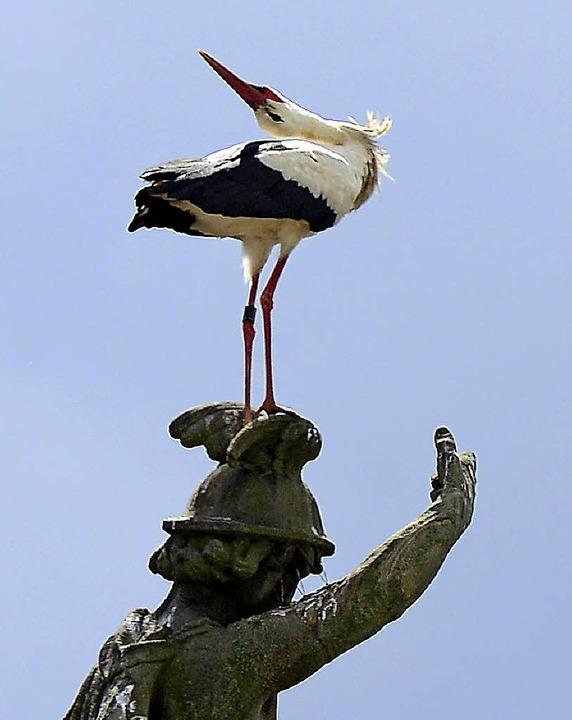 Na, brat' mir einen Storch: Der  Vogel an der Kajo   | Foto: Ingo Schneider