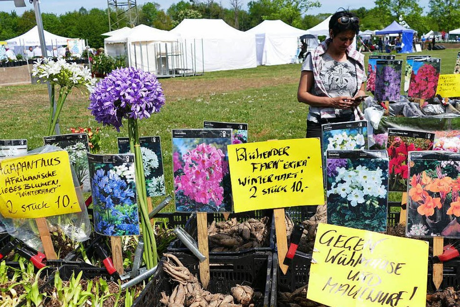 Die Gartenmesse bietet Vielfalt für Gartenfreunde an rund 90 Ständen. (Foto: Yvonne Siemann)