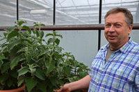 Gärtnerei Friderich in Sasbach baut mehr als 500 Kräutersorten an