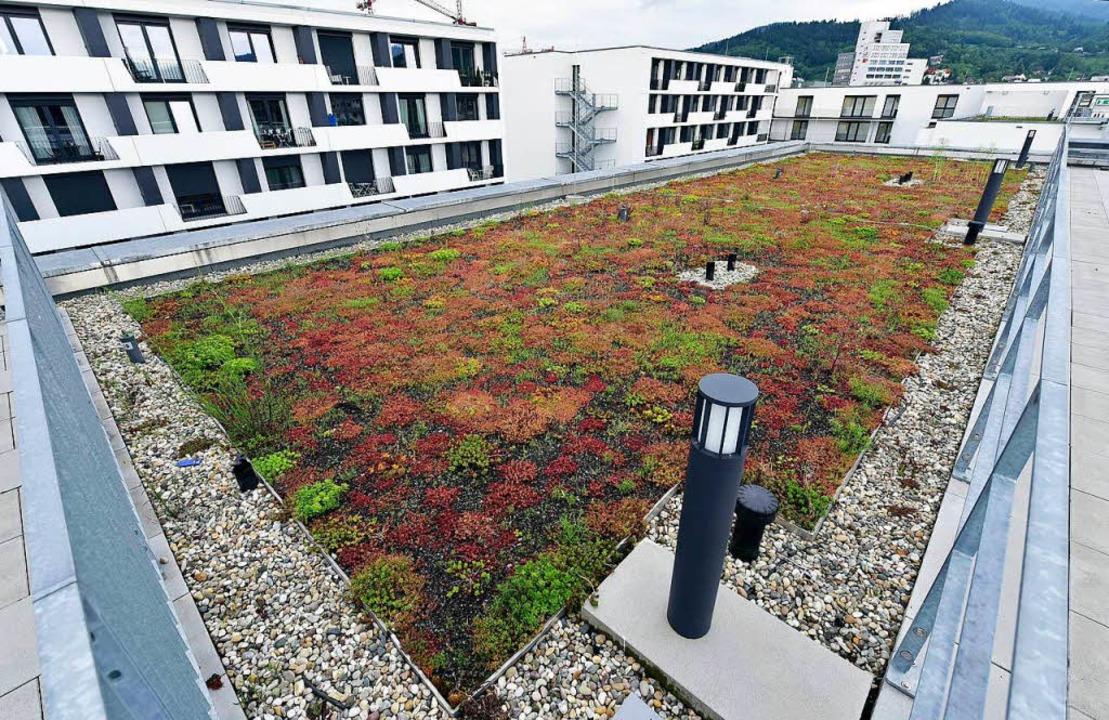 Bei der Begrünung des Daches des Stude...Substrat und pflegeleichten Pflanzen.   | Foto: Thomas Kunz