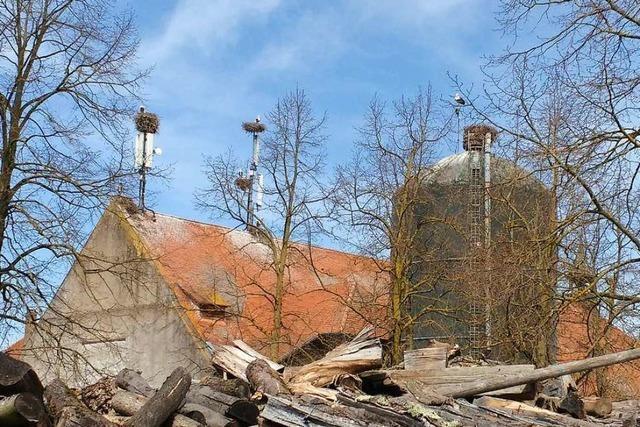 Auf dem Mundenhof gibt es so viele Storchennester wie noch nie