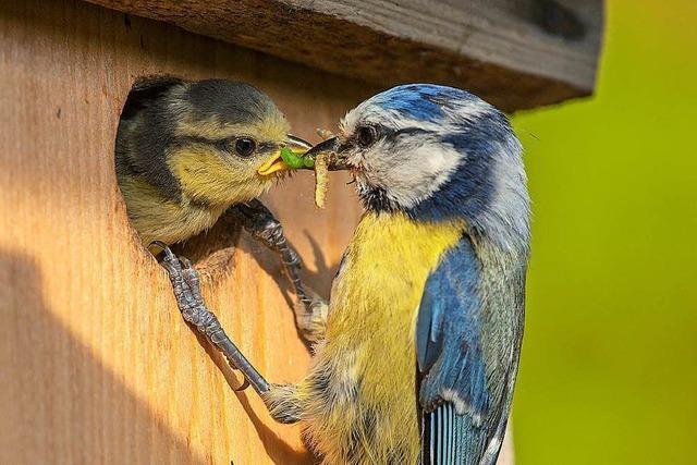Ornithologe: Vögel finden wegen Frühlingswetter zu wenig Nahrung