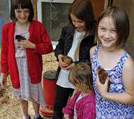 Kleintierzüchter müssen all ihre Helfer mobilisieren