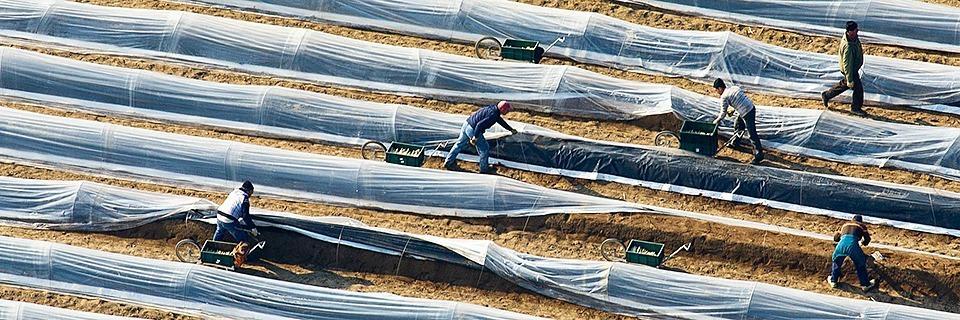 Südbadische Bauern fürchten zukünftigen Mangel an ausländischen Erntehelfern