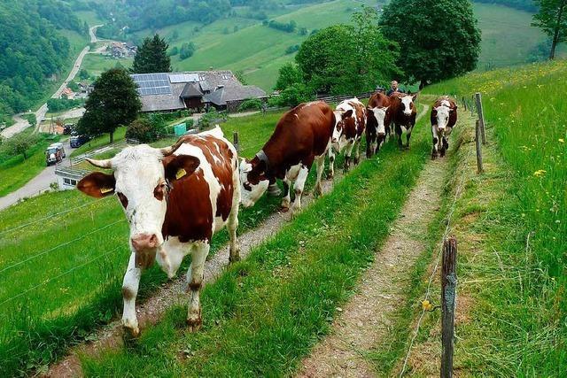 Ist die Zukunft der Weiden im Münstertal in Gefahr?