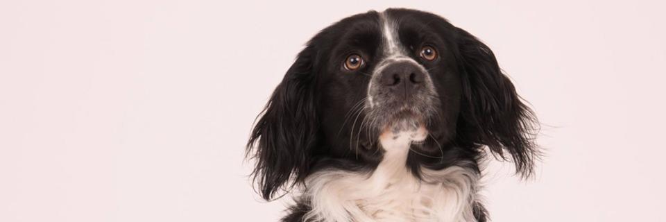 Studieren mit Hund - Wie klappt das Studium mit tierischer Begleitung?