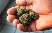 Verschärfung oder Lockerung? Debatte über Cannabis-Freimengen in den Bundesländern