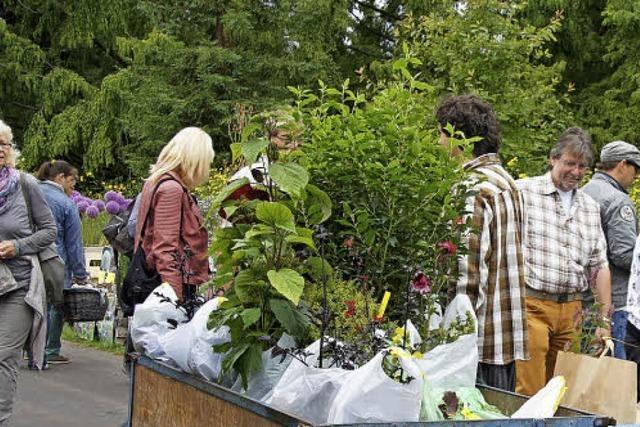 Blumen und Superfood für den heimischen Garten