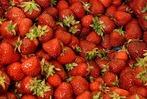 Fotos: Spargel- und Erdbeerfest auf dem Turnplätzli des Turnerbunds Wyhlen