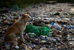 Fotos: Das Elend des Plastikmülls – zum Tag der Umwelt 2018